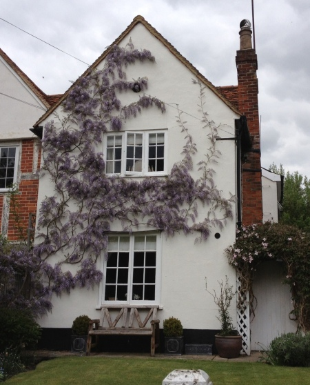 Wisteria at Toad Cottage, Piccotts End